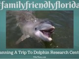 Our Family Is Planning To Visit The Dolphins 14