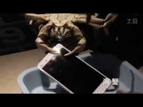 xiaomi-use-live-crabs-to-test-the-mi4-upset-some-international-fans-gizchina-com