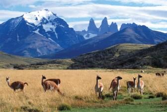Chile_GuanacosTorres_NS-hotel-tierra-patagonia.jpg