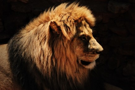 Pride Rock in SA, Angel Elliott Photography