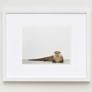 animal-art-photography-sharon-montrose-1.php