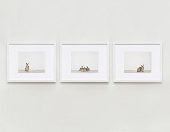 animal-art-photography-sharon-montrose-2.php