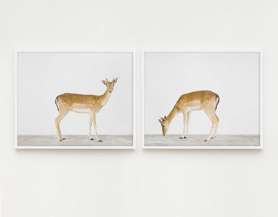 animal-art-photography-sharon-montrose-3.php