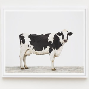 animal-prints-animal-art-photography-cow-1
