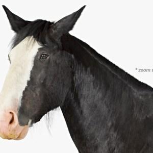 animal-prints-animal-art-photography-horse-1