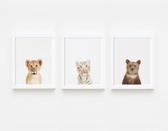 baby-animal-prints-faces-crown-nursery-decor-03
