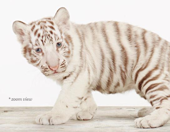 baby-animal-prints-nursery-art-crown
