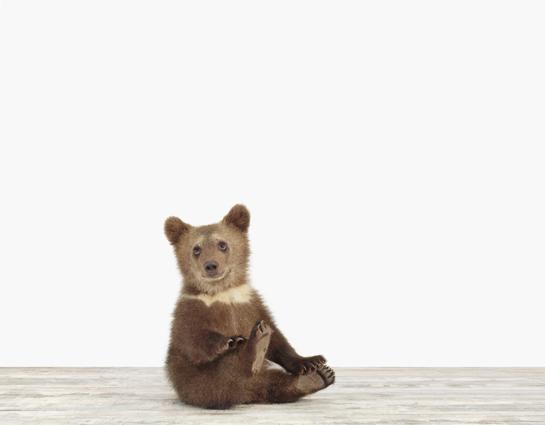 baby-animal-prints-nursery-art-photography