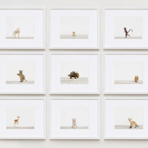 baby-animal-prints-nursery-art.php