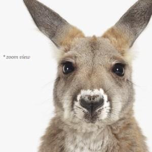 baby-kangaroo-art-for-nursery