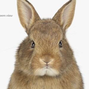bunny-art-for-nursery