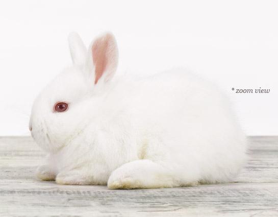 image-1baby-animal-prints-nursery-artphp