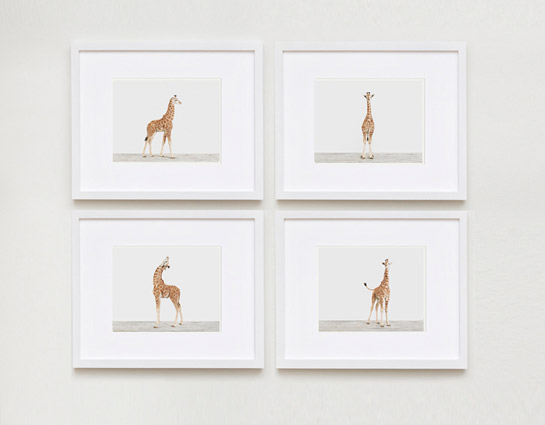baby-animal-prints-nursery-art