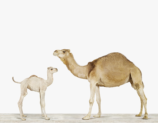 imagebaby-animal-prints-nursery-art3.php