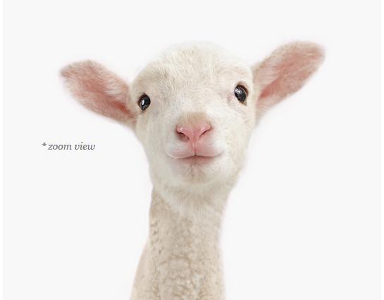 lamb-farm-decor-art-for-nursery