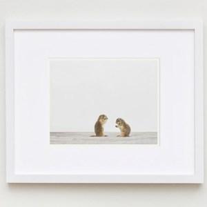 sharon-montrose-animal-photography-02
