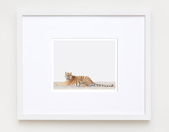 sharon-montrose-animal-photography-print-01