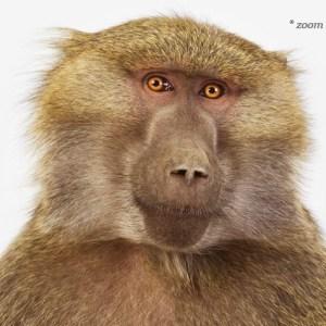 sharon-montrose-animal-photpgraphy-02