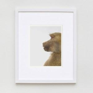sharon-montrose-animal-photpgraphy-03
