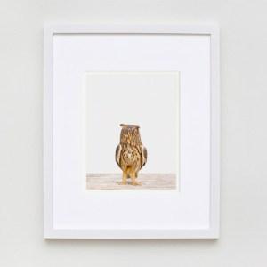 sharon-montrose-bird-art-2.php