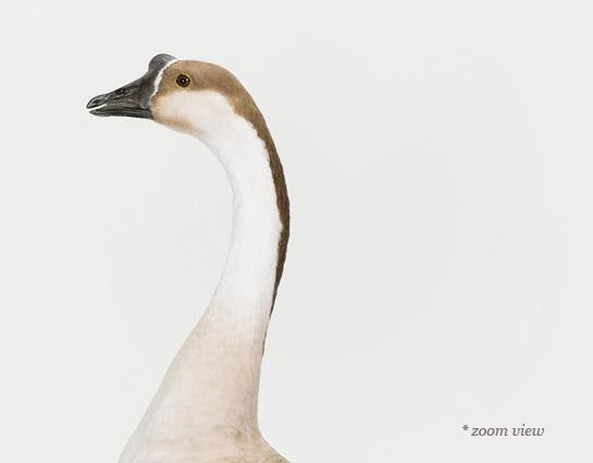 sharon-montrose-bird-photography.-1.php