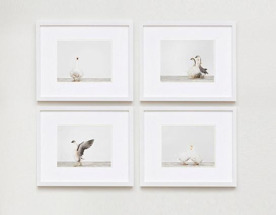 sharon-montrose-birds-photography-3.php