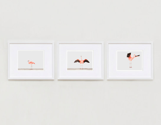 sharon-montrose-flamingo-bird-ar-2.php
