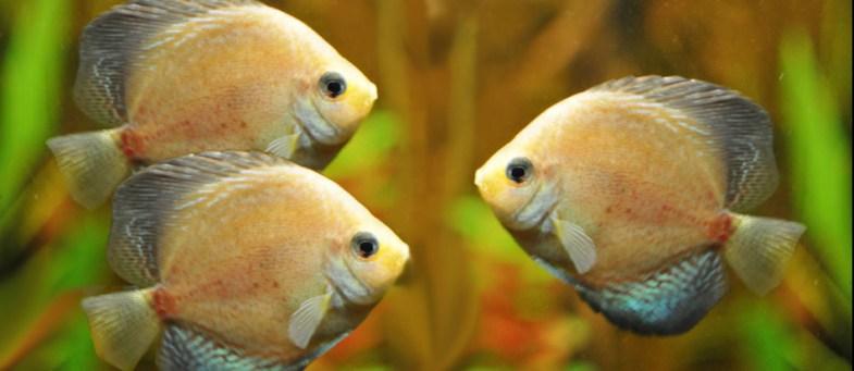 Fish buy 2 get 1