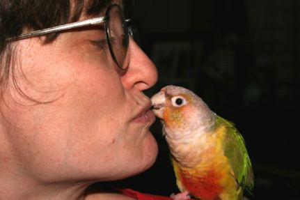 Kissing Bird