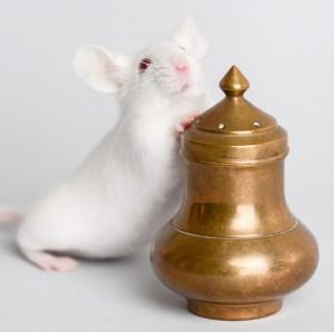 The Animal Store Mouse Animal Jokes