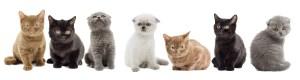 Kitten variety