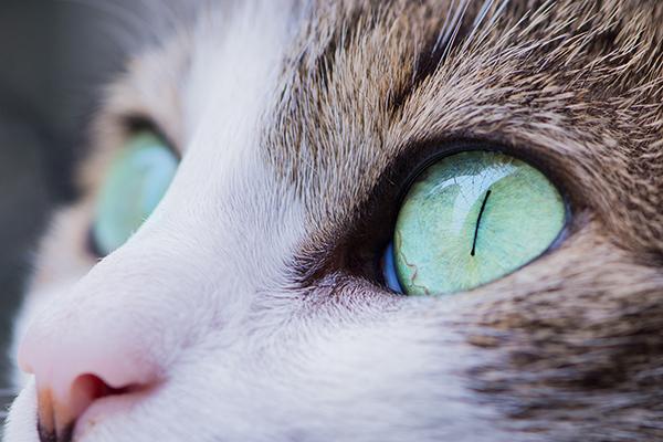 Pet Kitten