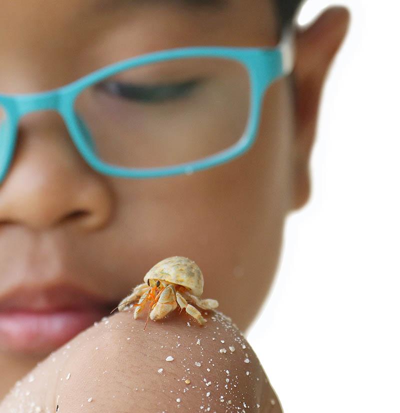 Child with hermit Crab