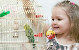 Parakeet special