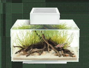 Fluval Edge 6-gallon aquarium