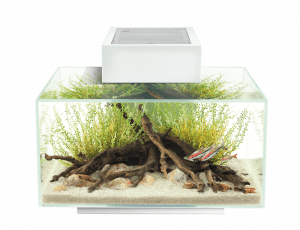 Fluval Edge 6-gallon