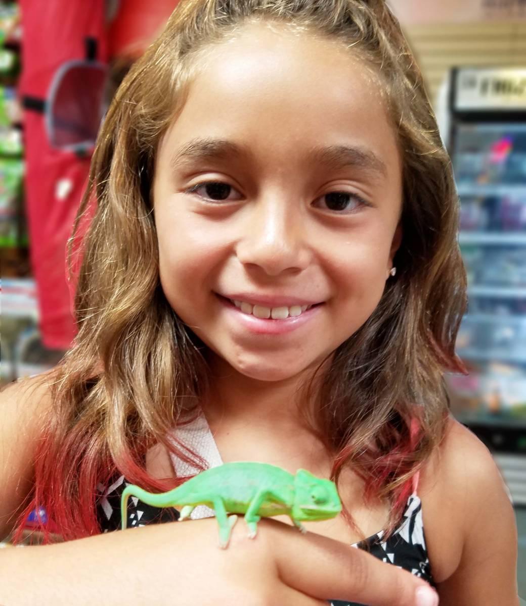 The Animal Store Veiled Chameleon