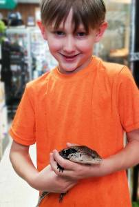 Pet Blue tongue skink