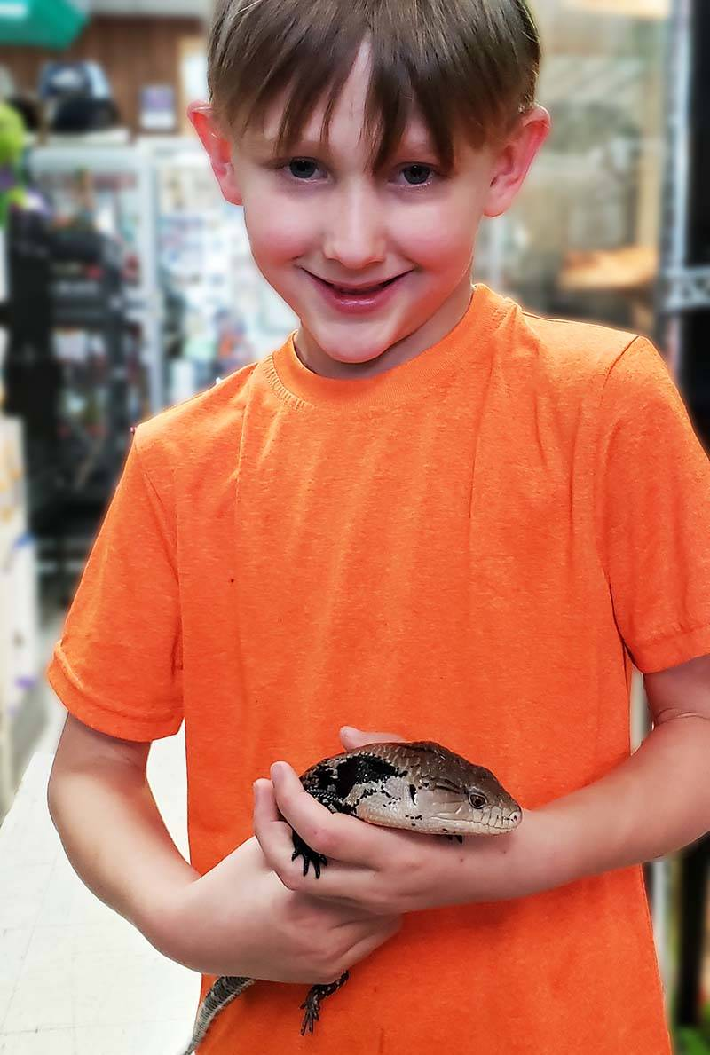 The Animal Store Pet Blue Tongue Skink