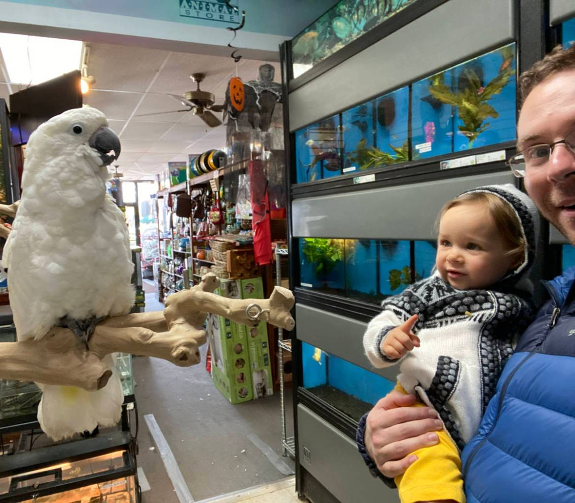 Vika and Dad meet the Cockatoo at The Animal Store