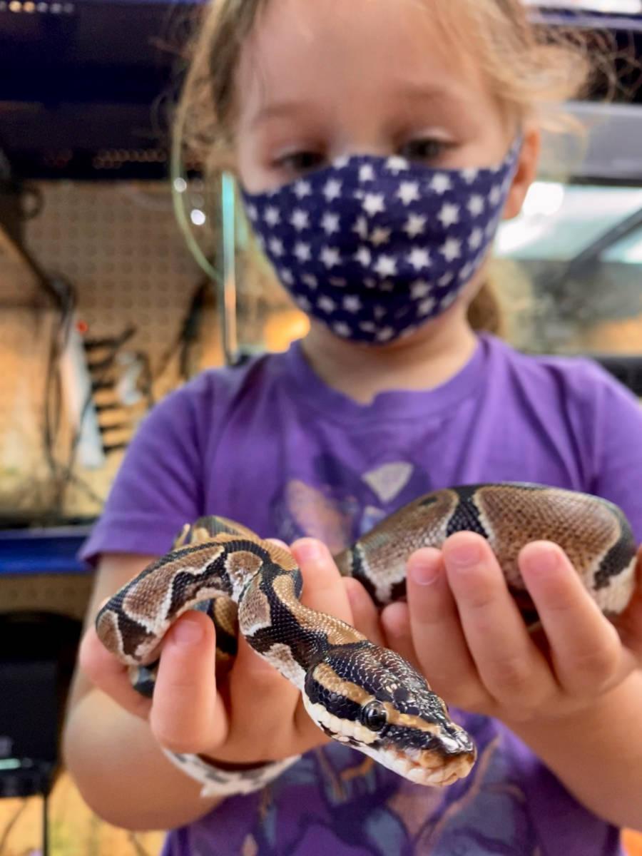 Visit The Animal Store: Vika and the ball python