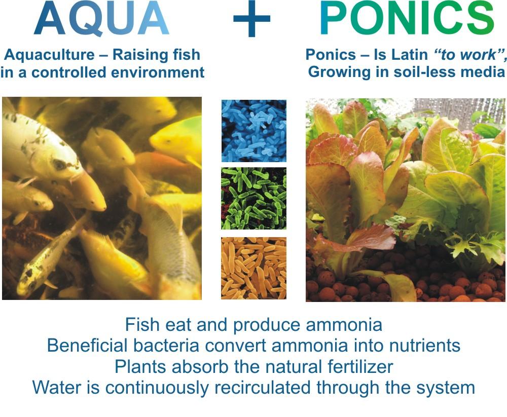 hight resolution of aquaponics defined