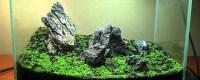 Create a Carpet in Your Planted Tank | The Aquarium Guide