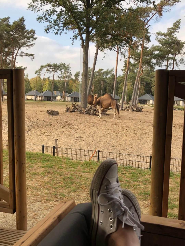 Uitzicht in Safari Resort Beekse Bergen