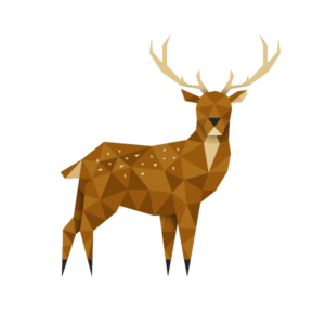 The Ark Open Farm's sika deer stag