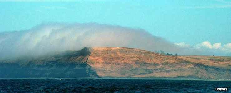 Protection Island National Wildlife Refuge The Sights