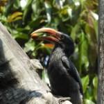 צילום של הדלי בעל עיניי הנץ מהודו