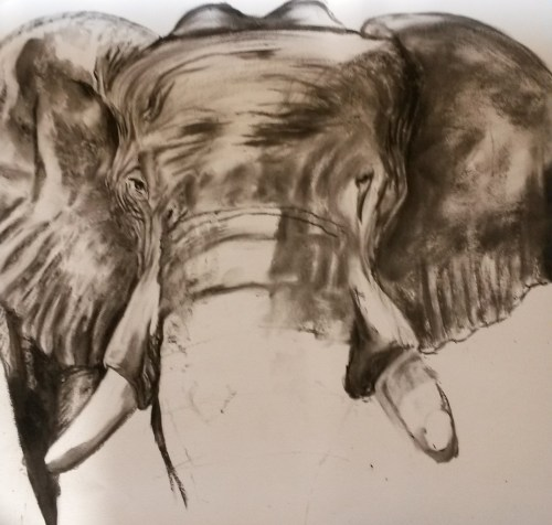 Elephant in Charcoal (42x59cm, 16.5x23.25in) Charcoal on Paper