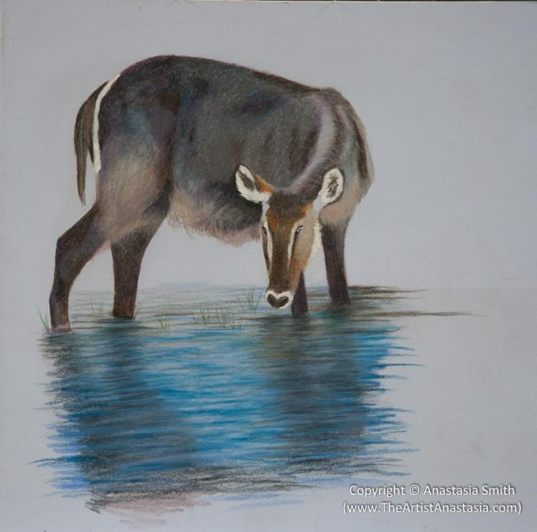 Waterbuck in Water Study (25x25cm, 10x10in)
