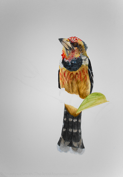 Crested Barbet, 37×55, Mixed Media on Paper
